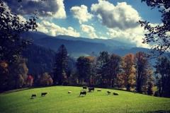 Gutschi_Ranch_16