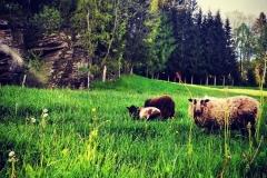 Gutschi_Ranch_32