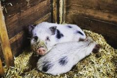 Gutschi_Ranch_36