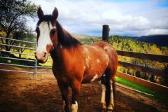 Gutschi_Ranch_38