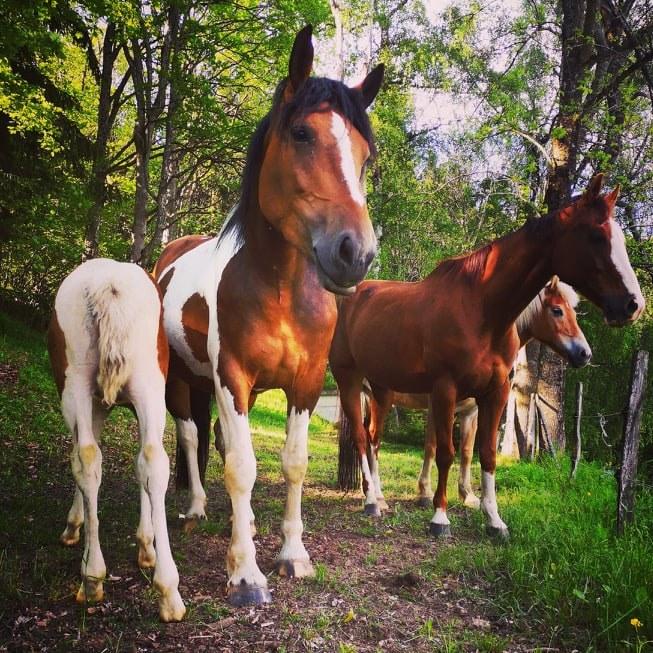 Urlaub mit dem eigenen Pferd